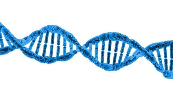 giải mã gen thể chất 1